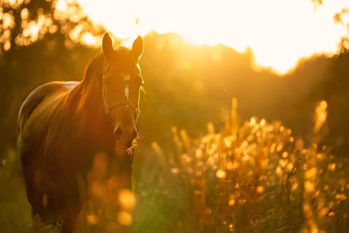 Bild von einem Pferd in einem Sonnenuntergang