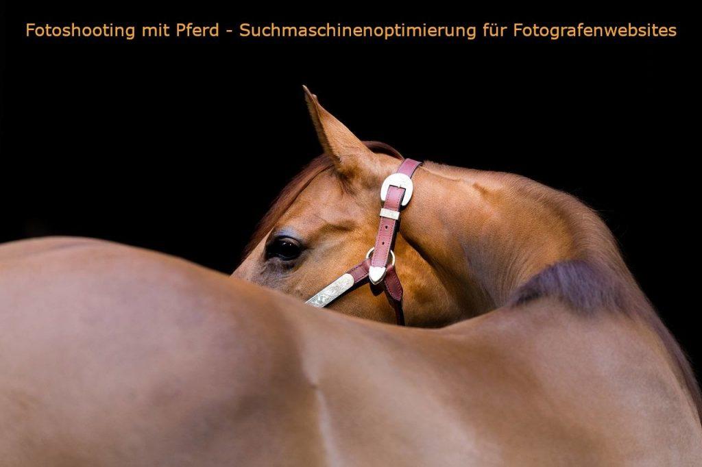 Auf dem Bild ist ein Pferd in der Seitenansicht abgebildet mit dem Schriftzug Fotoshooting mit Pferd - Suchmaschinenoptimierung für Fotografenwebsites