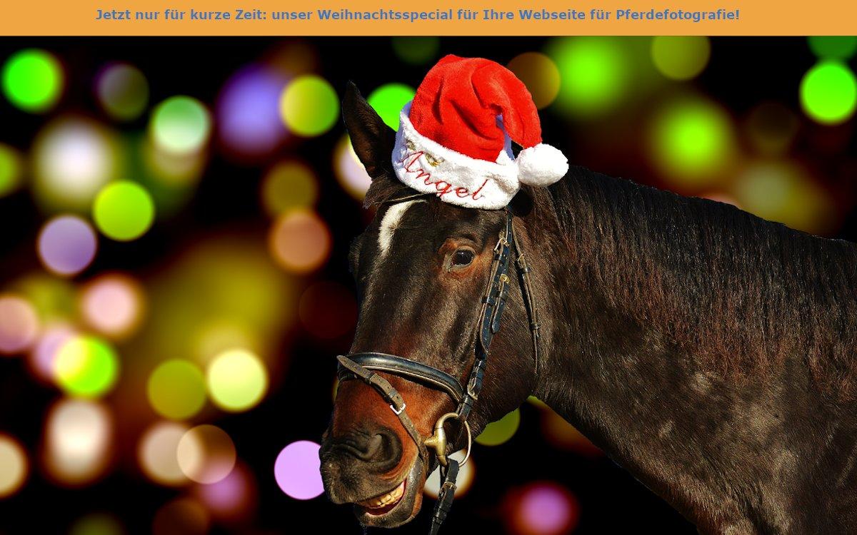 Auf dem Bild befindet sich ein Pferd mit einer Weihnachtsmütze